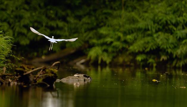 La reserva biológica Indio Maíz alberga animales en peligro de extinción como el Jaguar, el Danto o Tapir y la Lapa Verde.