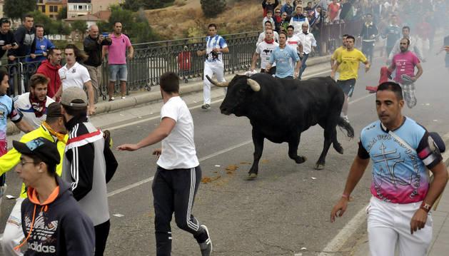 'Pelado' protagoniza la celebración del Toro de la Peña, en Tordesillas.