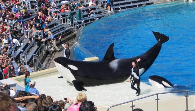 California prohíbe los espectáculos con orcas en cautividad