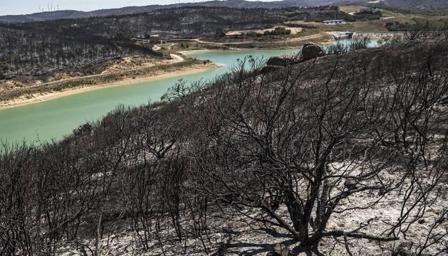 Tres semanas después del mayor incendio de Navarra
