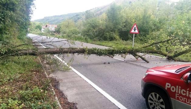 El árbol caído en Santesteban.