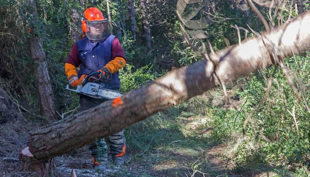 Limpieza forestal en el monte San Cristóbal, tarea que se imparte en la escuela Aranzadi.