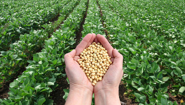 Semillas de soja.