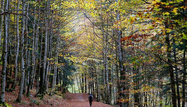Otoño en la Selva de Irati.