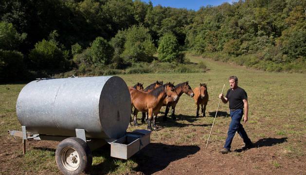 El ganadero Joaquín Mina Turrillas hace un mes que lleva agua a unos potros por la falta de agua en los manantiales, fuentes y regatas de los prados en Izu (valle de Arce).