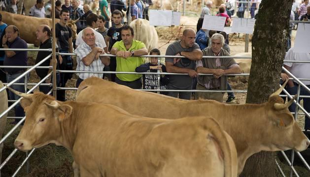 Feria de ganado pirenaico en Elizondo