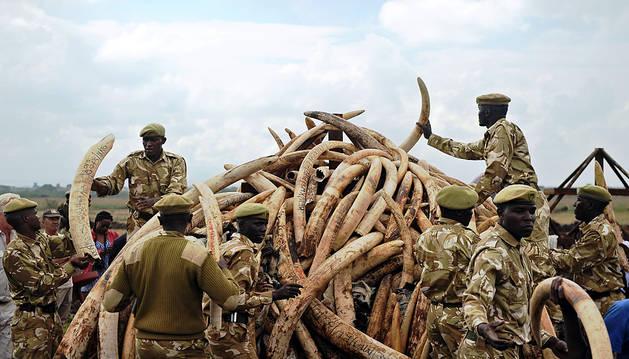 La prohibición de la venta de marfil divide a los países africanos