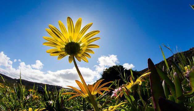 soleado de primavera en el Parque Nacional Montaña de la Mesa en Ciudad del Cabo, Sudáfrica