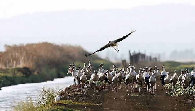 Homenaje al ornitólogo Francisco Bernis el Día de las Aves