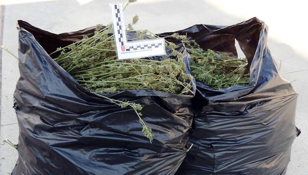 Foto de parte de los 8 kilos de marihuana intervenida en Noáin.