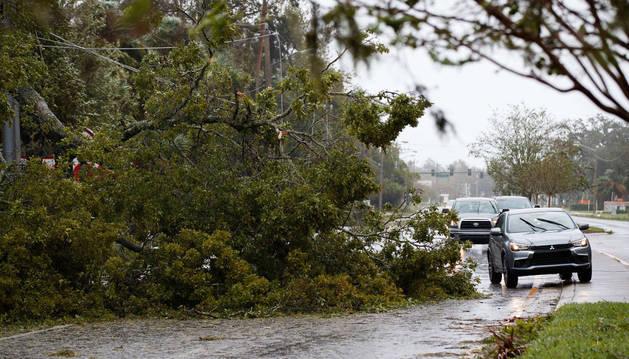 Los vehículos conducen alrededor de un árbol caído en Ormond Beach, Florida.