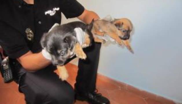 Un agente con dos de los cachorros recuperados.