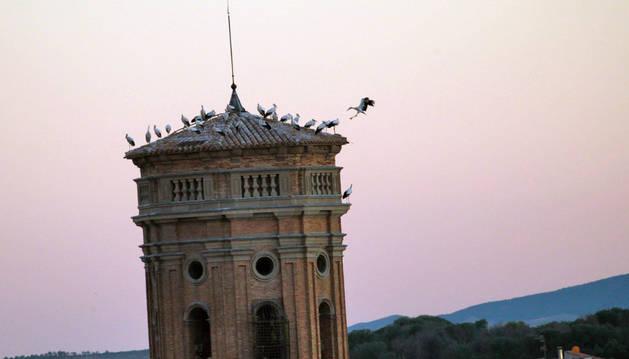 Imagen de varias cigüeñas en lo alto del campanario de la Catedral de Tudela.