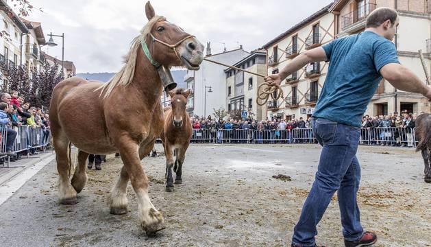 El tercer domingo de octubre tienen lugar en Alsasua las ferias de ganado