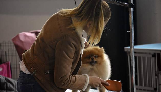 Exposición y exhibición de perros