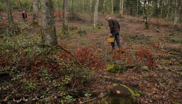 Un aficionado inspecciona el suelo en el parque micológico de Ultzama.