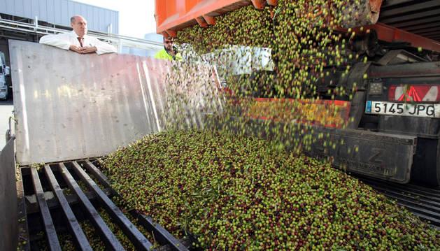 Un camión vierte las olivas en presencia de Jesús Marín, propietario de Urzante.