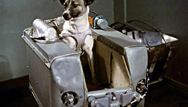 Laika fue encontrada vagando por las calles de Moscú.