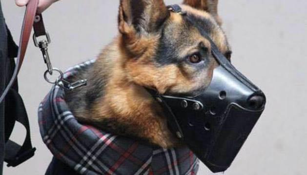 Uno de los perros adiestrados para defender a víctimas de violencia de género.