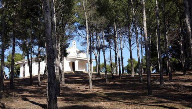 Imagen del Pinar de Santa Quiteria con la ermita, al fondo.