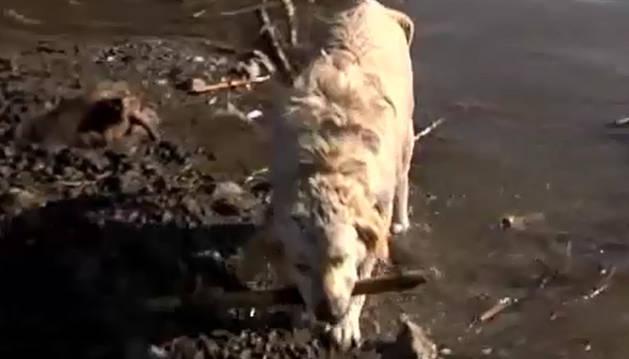 Uno de los animales rescatados.