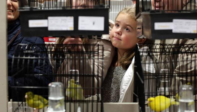 Imagen de una niña observa los distintos ejemplares en sus jaulas.