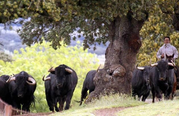 Imagen de los toros de Puerto de San Lorenzo.