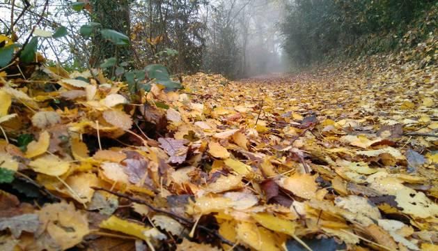 Fotos del otoño 2016 de los lectores