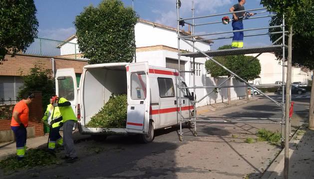 Varios trabajadores del programa podan árboles