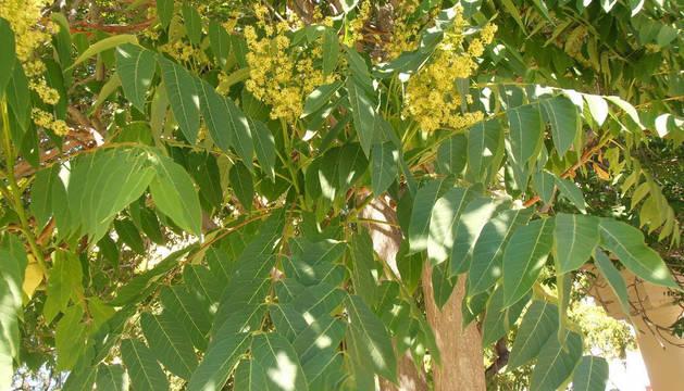 Imagen de detalle de las hojas de un alianto.