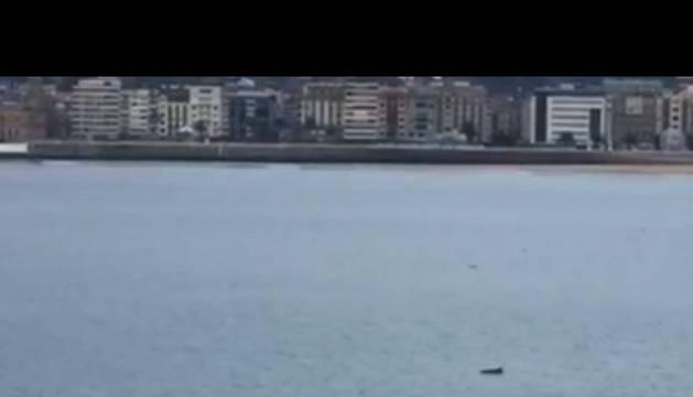 El delfín, en una captura del vídeo de Diario Vasco