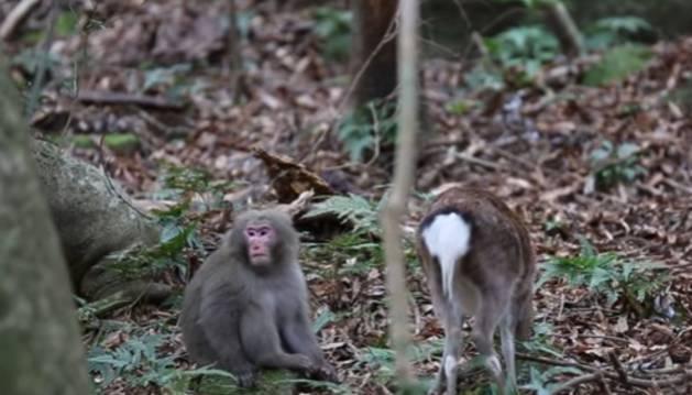 Imagen del vídeo del mono y la cierva.