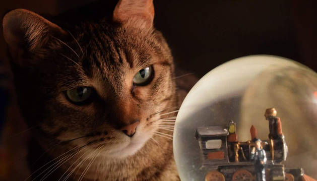 Imagen de la foto ganadora realizada por Mapi Jiménez a su gata Tina mirando una bola de cristal.