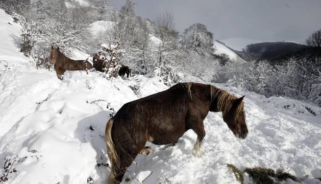 El primer temporal de nieve del invierno ha llegado a la Comunidad foral.