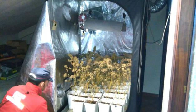 Imagen del armario para cultivo de marihuana