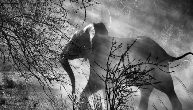 Las fotografías de Sebastiao Salgado llevan al paseo de Sarasate la 'Génesis'