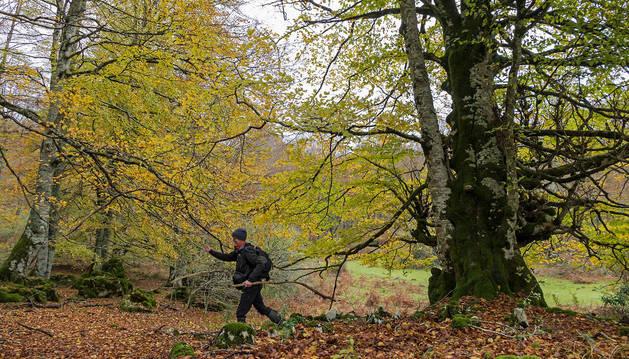Una persona pasea por uno de los parajes de la sierra de Urbasa, recurso muy visitable en la zona de Tierra Estella como patrimonio natural por excelencia.