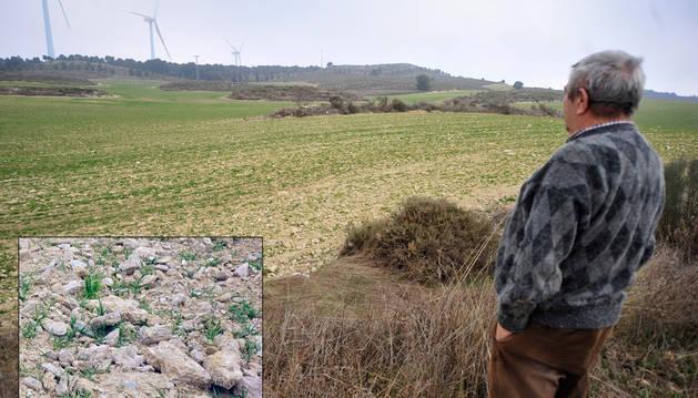Ángel Mª Pérez Osés, en un campo de  cereal en secano en Peralta.