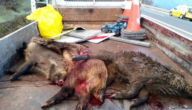 Animales retirados por Conservación de Carreteras.