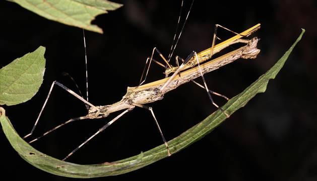 Descubiertas nuevas especies en el parque boliviano Madidi