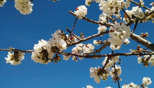 La primavera, retratada por los lectores de Diariodenavarra.es.
