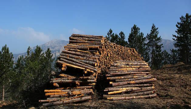 Una pila de troncos de pino laricio, extraídos en una franja de terreno del Pinar de Mora, de Azuelo, en las proximidades de la Sierra de Codés. La actuación está planificada en dos años sobre un total de 43 hectáreas.