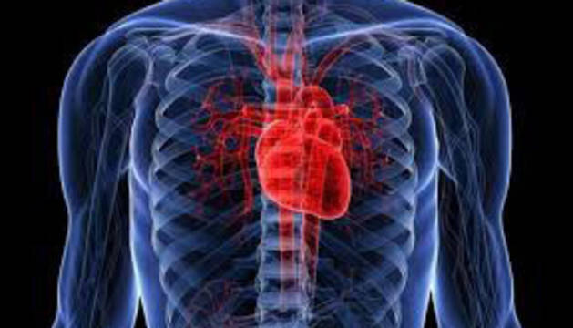 Sabes por qué el corazón está en el lado izquierdo del cuerpo ...