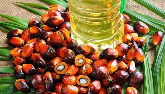 Imagen del fruto del aceite de palma.