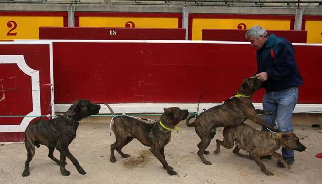 Imagen de uno de los criadores, con cuatro de estos perros, de pelaje atigrado.