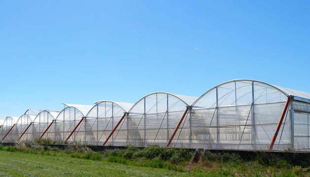 foto de Nuevos invernaderos de Vegetales Línea Verde.
