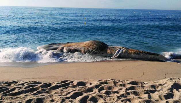 Una barca ha podido retirar los restos del animal este sábado.