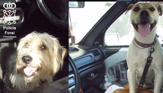 Los animales en el vehículo.
