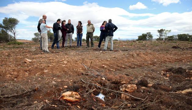 Imagen de la visita de autoridades a una de las zonas donde se han talado los pinos.