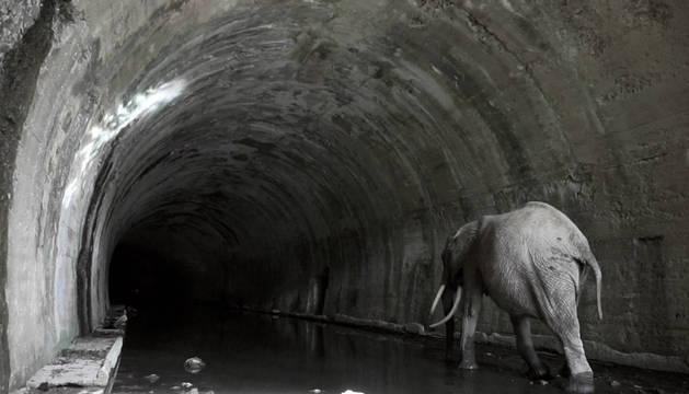 Momento en el que el elefante se adentra en el túnel de la Engaña, entre Burgos y Santander.
